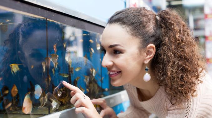 Thuiswerken virtueel aquarium